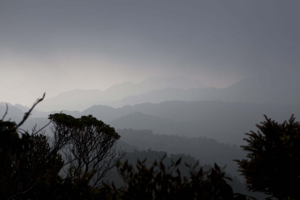 foggy yakushima